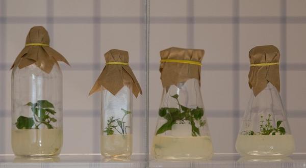 Inteligencija biljaka.jpg